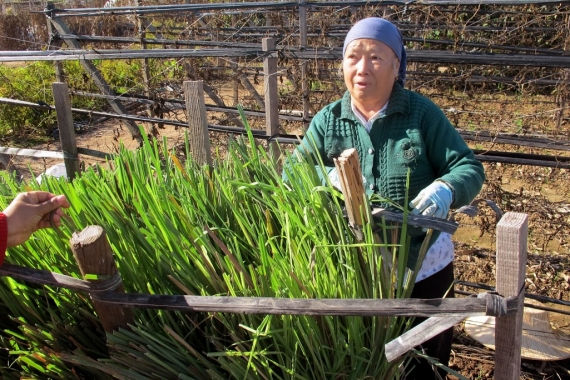 A Hmong farmer tends to her lemongrass plant at a community garden in Fresno. Image source: Huyen Nguyen.