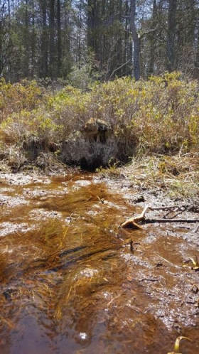 This natural spring emerges from a white cedar bog in the heart of the Pine Barrens wilderness.